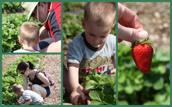 Strawberry picking collage