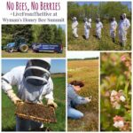 No Bees, No Berries – #LiveFromTheHive with Wyman's