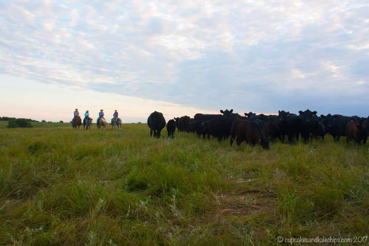 Four Ranchers Herding a Group of Cattle in a Field