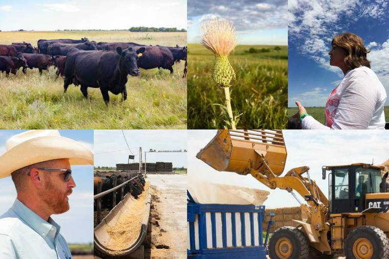 A Collage of Images From the Cattle Ranch Including Pictures of a Feeding Lot